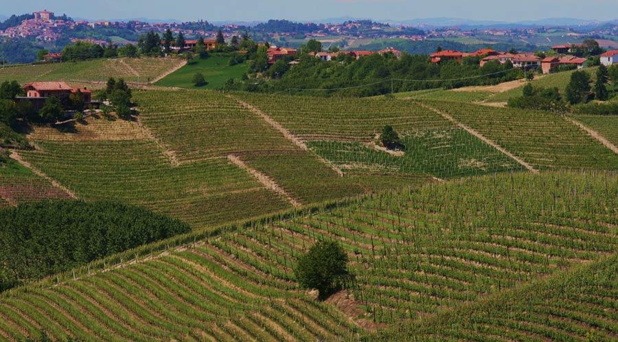 Volando tra i vigneti del Piemonte – Uscita enogastronomica