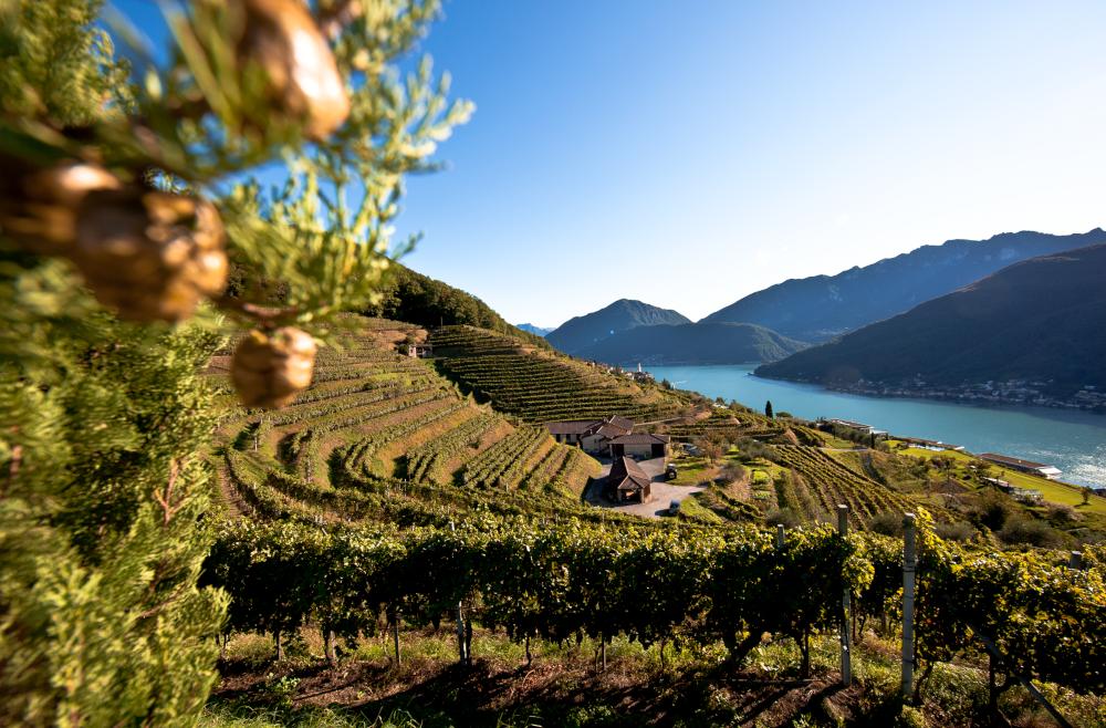 Weinreise – Genussreise Tessin